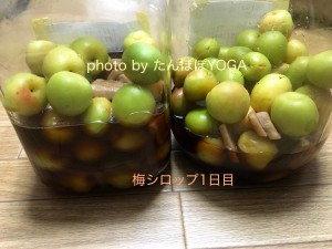 梅シロップ1日目