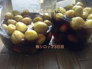 梅シロップ3日目