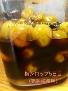 梅シロップ5日目(完熟梅)