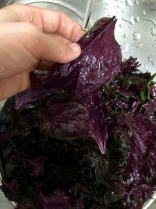 赤紫蘇を洗う